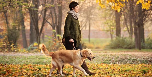 Labrador Dog Sitters