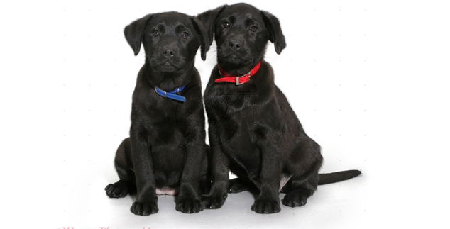 Names for a Black Lab Puppy
