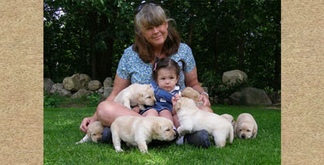 Labrador Breeders in New Hampshire